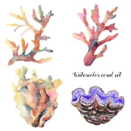サンゴの水彩セットです。手描きの白い背景に分離された水中の枝。熱帯の海の実例。デザイン、印刷または背景。