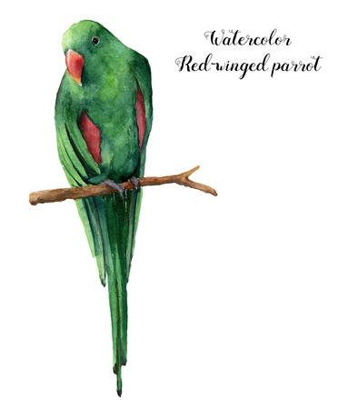 수채화 물감 빨간색 앵무새입니다. 손으로 그린 열 대 조류 흰색 배경에 고립. 자연 동물 그림입니다. 디자인, 인쇄 또는 배경