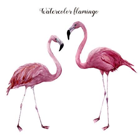 フラミンゴ水彩セットです。白い背景に分離されたエキゾチックな渉禽類の鳥のイラスト。熱帯の自然の風景。デザイン、プリントまたはバック グ