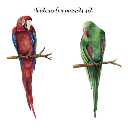 Watercolor parrots. Hand painted red-and-green macaw and red-winged parrot isolated on white background. Nature illustration with bird. For design, print or background. Banco de Imagens