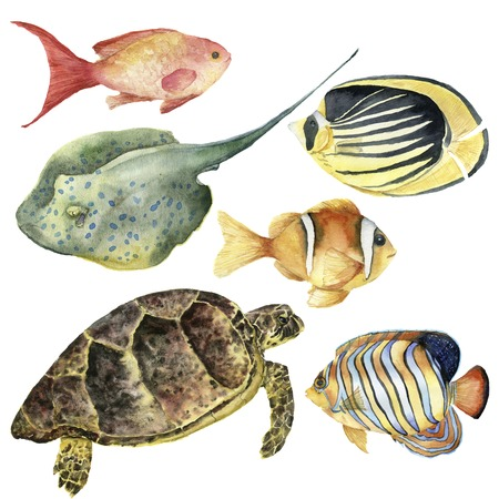 Watercolor tropical fish and underwater animal set. Hand painted Royal angelfish, Butterflyfish, Sea goldie, Clownfish, turtle and stingrey isolated on white background. For design, fabric or print. Banco de Imagens - 82481086
