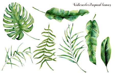 Watercolor set with tropical leaves. Hand painted palm branch, fern and leaf of magnolia. Tropic plant isolated on white background. Botanical illustration. For design, print or background 스톡 콘텐츠
