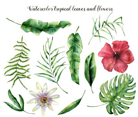 Waterverf met tropische bladeren wordt geplaatst dat. Handgeschilderde palmtak, varen en blad van magnolia. Tropische plant geïsoleerd op een witte achtergrond. Botanische illustratie. Voor ontwerp, print of achtergrond