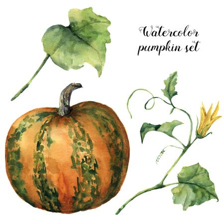 Conjunto de calabaza de acuarela. Calabaza pintada a mano con la flor, las hojas y la rama aislada en el fondo blanco. Ilustración botánica para el diseño. Impresión de Halloween Foto de archivo - 82939095