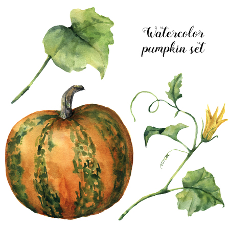 Watercolor pumpkin set. Hand painted pumpkin with flower, leaves and branch isolated on white background. Botanical illustration for design. Halloween print Stock Photo