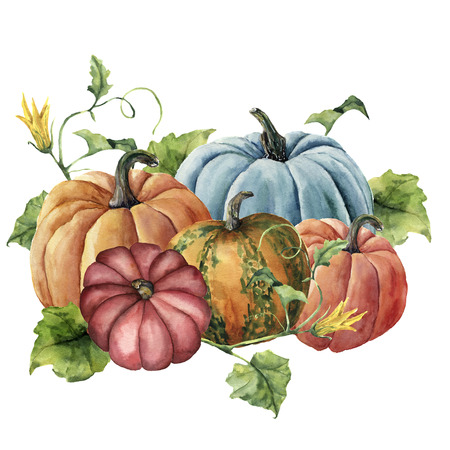 Watercolor autumn harvest. Hand painted bright pumpkins with leaves and flowers isolated on white background. Botanical illustration for design. 스톡 콘텐츠