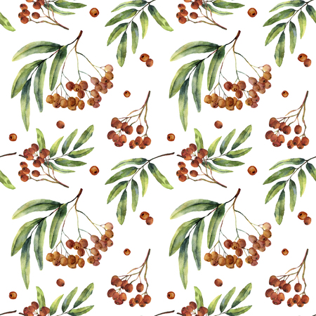 Watercolor seamless pattern with rowan. Hand painted mountain-ashe fruit with leaves and branch isolated on white background. Botanical illustration for design. Stock Photo