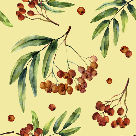 Watercolor autumn pattern with rowan. Hand painted mountain-ashe fruit with leaves and branch isolated on yellow background. Botanical illustration for design. Stock Photo