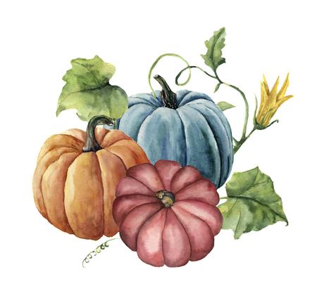Calabazas de otoño acuarela. Calabazas brillantes pintadas a mano con hojas y flores aisladas sobre fondo blanco. Ilustración botánica para el diseño. Foto de archivo - 84784157