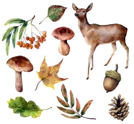 Watercolor forest set. Hand painted reindeer, mushrooms, fall leaves, pine cone, rowan, acorn isolated on white background. Nature collection for design. Stock Photo