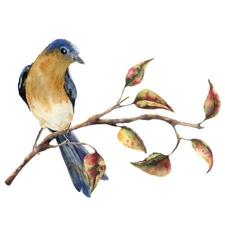 Watercolor robin redbreast sitting on tree branch with red and yellow leaves. Autumn illustration with bird and fall leaves isolated on white background. Nature print for design. Stock Photo