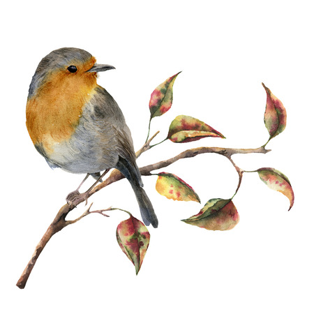Watercolor robin sitting on tree branch with red and yellow leaves. Autumn illustration with bird and fall leaves isolated on white background. Nature print for design. Archivio Fotografico