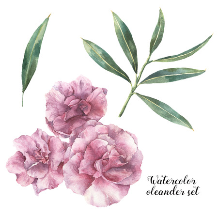 hand print: Watercolor floral set. Hand painted oleander flowers with leaves and branch isolated on white background. Botanical illustration for design, print, fabric.