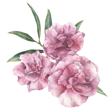 Watercolor floral bouquet. Hand painted oleander with leaves and branch isolated on white background. Botanical illustration for design, print, fabric.