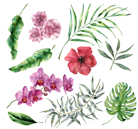 Watercolor tropical set with flowers and leaves. Hand painted palm, monstera, hibiscus, orchid, oleander, eucalyptus, palm branches isolated on white background. Floral iluustration for design, print