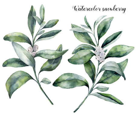 Watercolor snowberry set. Hand painted snowberry branch with white berry isolated on white background. Christmas botanical clip art for design or print. Holiday plant