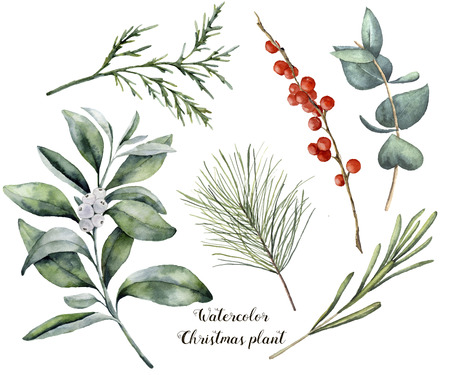 Watercolor Christmas plant and berries. Hand painted rosemary, eucalyptus, cedar, snowberry and fir branches isolated on white background. Floral botanical clip art for design or print. Standard-Bild