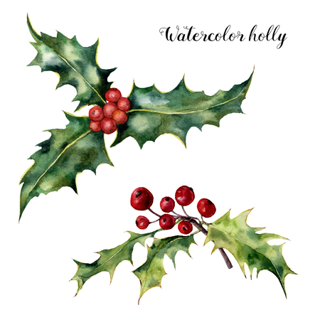 Watercolor holly set. Hand painted holly branch with red berry isolated on white background. Christmas botanical clip art for design or print. Holiday plant.