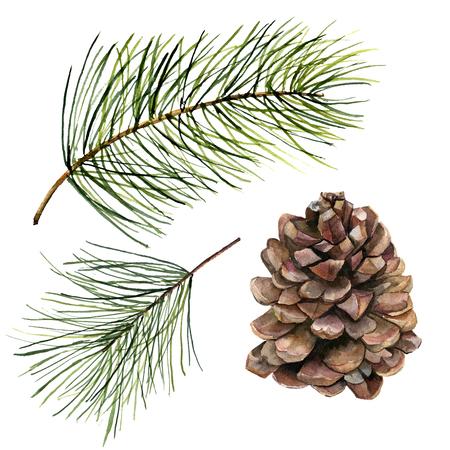水彩パイン コーンとモミ ブランチ セット。白い背景に分離されたコーンと手塗られた松の枝。植物クリップ アート デザインまたは印刷用。休日工