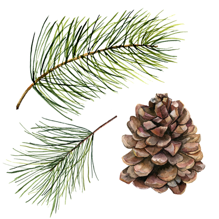 Watercolor pine cone and fir branch set. Hand painted pine branch with cone isolated on white background. Botanical clip art for design or print. Holiday plant