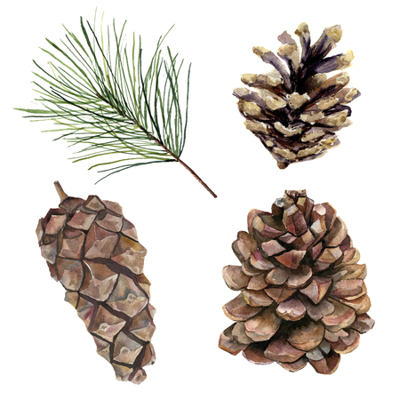 Watercolor pine cones set. Hand painted pine branch with cones isolated on white background. Botanical clip art for design or print. Holiday plant.