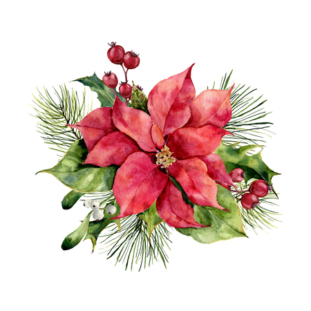 Watercolor poinsettia with Christmas floral decor. Hand painted traditional flower and plants: holly, mistletoe, berries and fir branch isolated on white background. Holiday print. Stock Photo