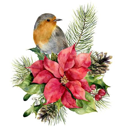 수채화 로빈, 크리스마스 꽃 장식 포 인 세 티아. 손으로 그린 조류와 전통적인 꽃과 식물 : 홀리, 미 슬 토, 딸기 및 흰색 배경에 고립 된 전나무 분기.