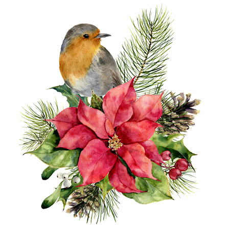 Robin de acuarela, flor de Pascua con decoración floral de Navidad. Pájaro pintado a mano y flores y plantas tradicionales: acebo, muérdago, bayas y rama de abeto aislado sobre fondo blanco. Impresión de vacaciones. Foto de archivo