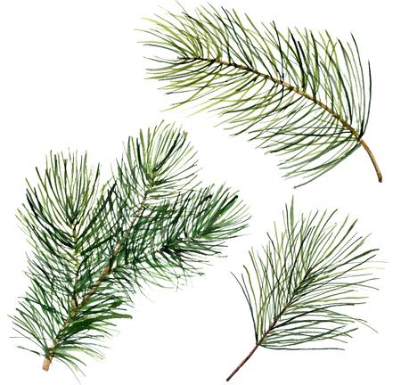 水彩のクリスマスの木の枝。手描きの花の伝統的な内装が白い背景に分離されました。休日を印刷します。 写真素材