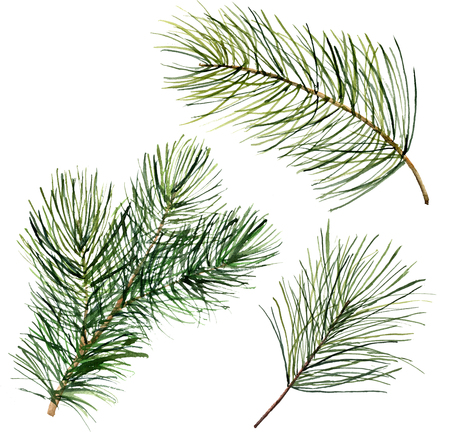Watercolor Christmas tree branch. Hand painted floral traditional decor isolated on white background. Holiday print.
