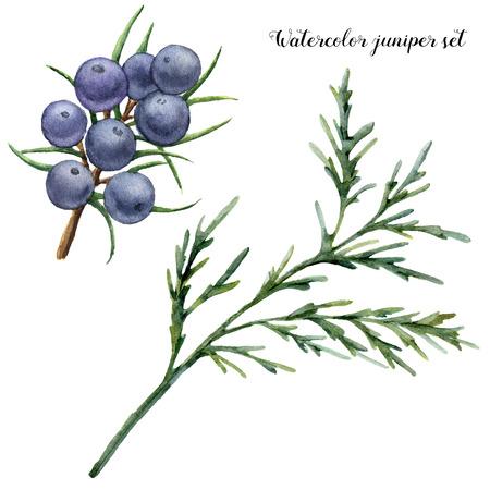 Aquarell Wacholder Set. Handgemalte blaue Beeren und Wacholderzweig lokalisiert auf weißem Hintergrund. Botanische Blumenillustration. Für Design oder Druck. Standard-Bild - 91452066