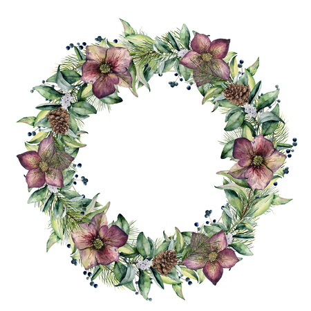 Watercolor winter wreath with hellebore flowers. Hand painted snowberry and eucalyptus branch isolated on white background. Floral border for design.