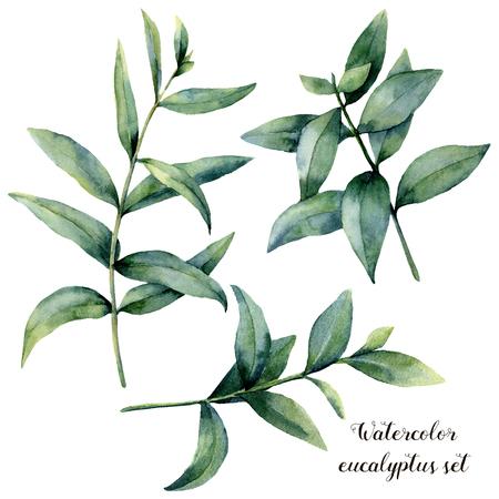 Set de branches aquarelle d'eucalyptus. Peint à la main des feuilles exotiques isolés sur fond blanc. Banque d'images - 91875965