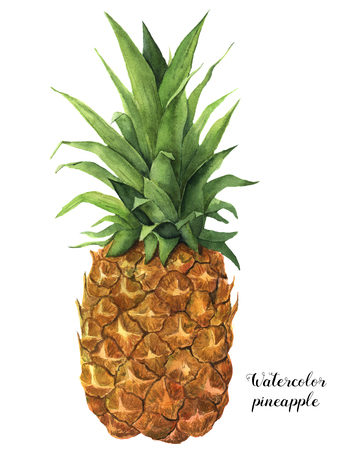 Watercolor pineapple. Hand painted tropical fruit with leaves isolated on white background. Food botanical illustration for design or print.