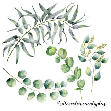 ユーカリの枝と水彩セット。種子と銀ドルユーカリの葉と枝を持つ手描きの花のイラストは、白い背景に孤立しました。デザイン、プリント、ファ