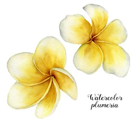 水彩プルメリア セット。手は、白い背景で隔離の熱帯の花を描いた。フランジパニ。デザインや背景。花のイラスト 写真素材