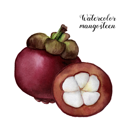 Watercolor mangosteen. Hand painted tropical fruits isolated on white background. Garcinia plant. For design or background. Food illustration