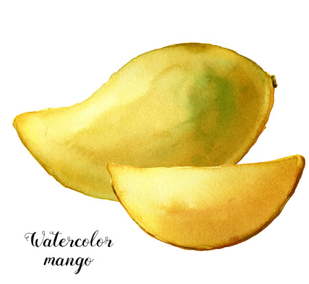 Watercolor yellow mango. Hand painted tropical fruits isolated on white background. Botanical food illustration for design or print.