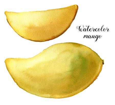 水彩黄色のマンゴーセット。白い背景に隔離された手描きのトロピカルフルーツ。デザインや印刷のための植物食品のイラスト 写真素材