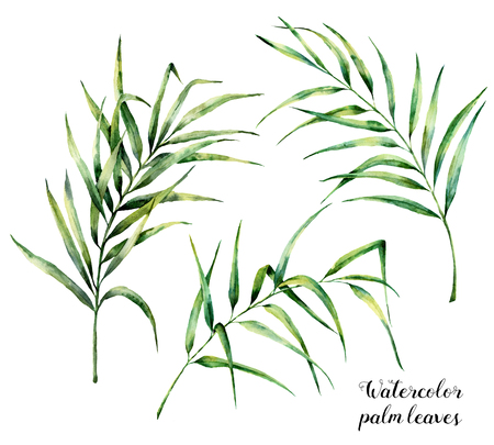 Watercolor palm leaves set. Hand painted botanical illustration with palm branches isolated on white background. Exotic leaves for design or print Stock Photo