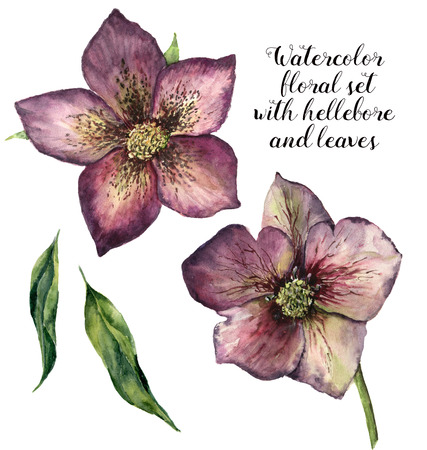 Watercolor floral set with hellebore and leaves. Hand painted winter flowers isolated on white background. Botanical illustration for design, print or fabric.