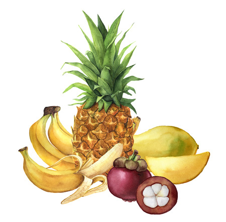 Waterverf tropisch fruit. Ananas, bananen, mangosteen, mango. Handgeschilderde tropische vruchten geïsoleerd op een witte achtergrond. Voor ontwerp of achtergrond. Voedsel illustratie