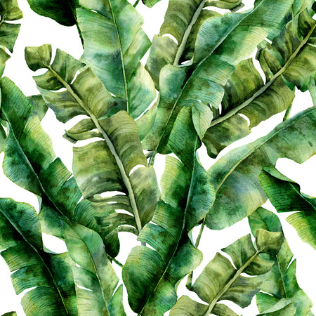 Watercolor pattern with magnificent banana palm leaves. Hand painted exotic greenery branch. Tropic plant isolated on white background. Botanical illustration. For design, print or background. Stock Photo