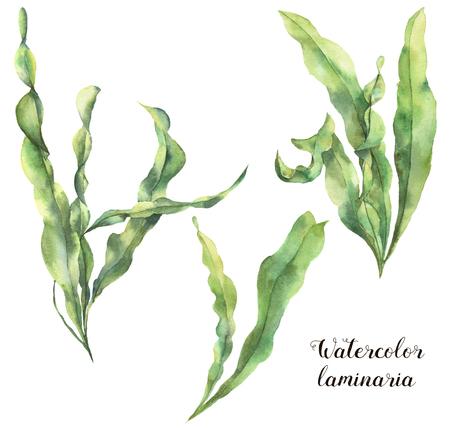 Aquarell Laminaria gesetzt. Handgemalte Unterwasserblumenillustration mit Algen verlässt die Niederlassung, die auf weißem Hintergrund lokalisiert wird. Für Design, Stoff oder Druck