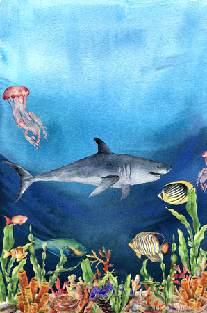 Watercolor coral reef border and shark. Hand painted underwater illustration with laminaria branch, fish, tridact, mollusk and shell isolated on ocean background. Nautical illustration for design. Stock Illustration - 95978588