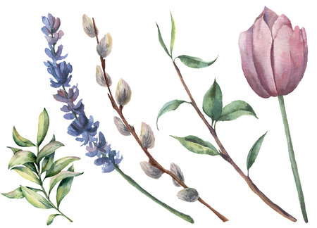 Watercolor spring floral set. Hand painted tulip, tree branch with leaves, lavender flower, willow and greenery isolated on white background. Botanical illustration for design or background.