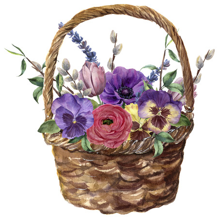 Watercolor basket with flowers. Hand painted tulip, pansies, anemone, ranunculus, willow, lavender and tree branch with leaves isolated on white background. For design, print or background. Фото со стока