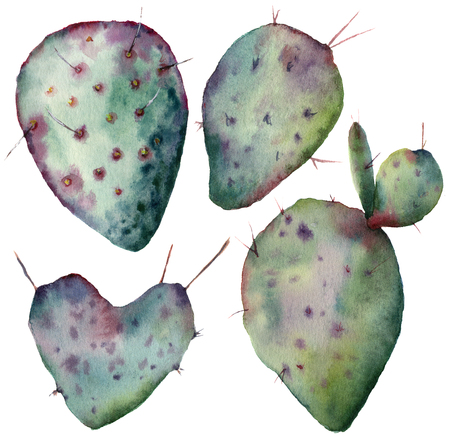 Watercolor cactus set. Hand painted opuntia isolated on white background. Illustration for design, print, fabric or background.