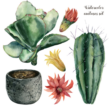 Watercolor cactus and flowerpot set. Hand painted cereus and echeveria with red and yellow flower isolated on white background. Illustration for design, print, fabric or background.