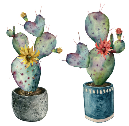 Watercolor cactus with flowers in a pot. Hand painted opuntia with red and yellow flowers isolated on white background. Illustration for design, print, fabric or background. Stock Photo